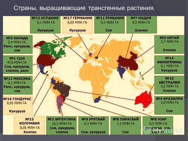 Страны, выращивающие трансгенные растения.
