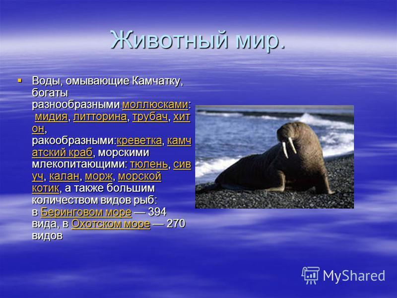 Животный мир. Воды, омывающие Камчатку, богаты разнообразными моллюсками: мидия, литорина, трубач, хит он, ракообразными:креветак, камчадский краб, морскими млекопитающими: тюлень, сивуч, калан, морж, морской котик, а также большим количеством видов