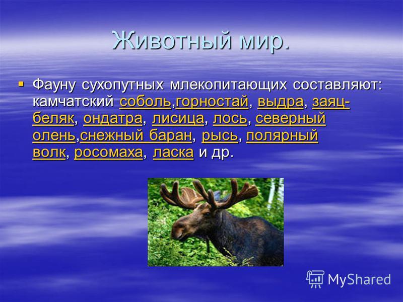 Животный мир. Фауну сухопутных млекопитающих составляют: камчадский соболь,горностай, выдра, заяц- беляк, ондатра, лисица, лось, северный олень,снежный баран, рысь, полярный волк, росомаха, ласка и др. Фауну сухопутных млекопитающих составляют: камча