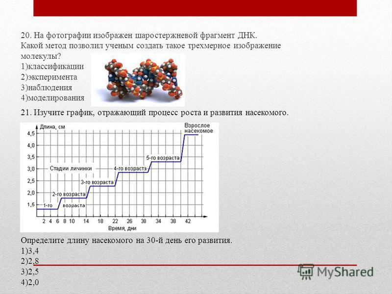 20. На фотографии изображен шаростержневой фрагмент ДНК. Какой метод позволил ученым создать такое трехмерное изображение молекулы? 1)классификации 2)эксперимента 3)наблюдения 4)моделирования 21. Изучите график, отражающий процесс роста и развития на