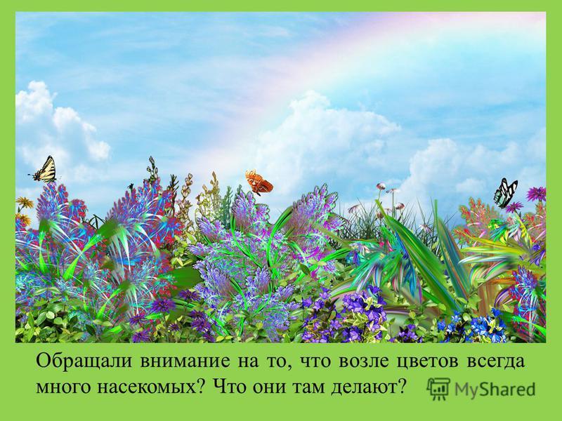 Обращали внимание на то, что возле цветов всегда много насекомых? Что они там делают?