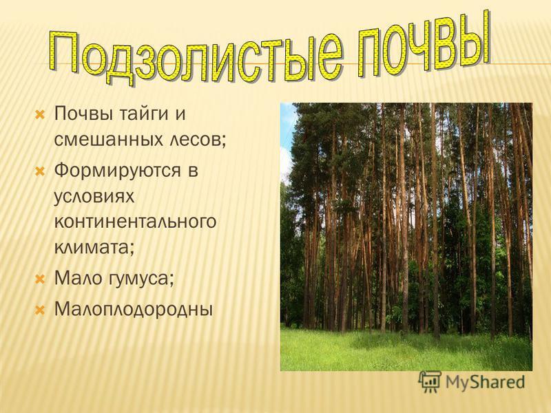 Почвы тайги и смешанных лесов; Формируются в условиях континентального климата; Мало гумуса; Малоплодородны