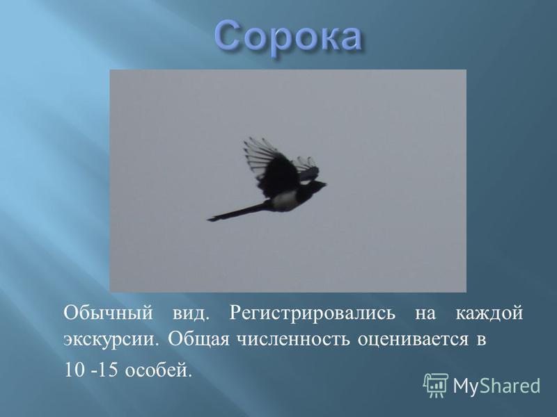 Обычный вид. Регистрировались на каждой экскурсии. Общая численность оценивается в 10 -15 особей.