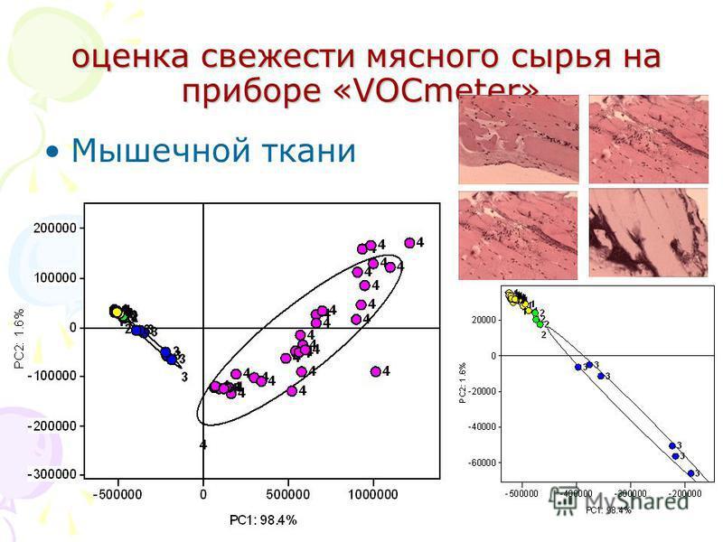 оценка свежести мясного сырья на приборе «VOCmeter» оценка свежести мясного сырья на приборе «VOCmeter» Мышечной ткани