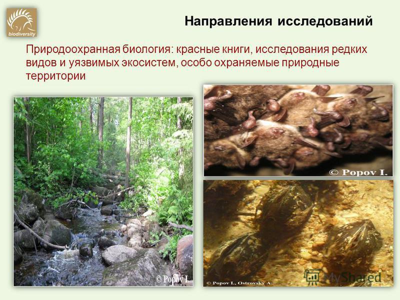 Природоохранная биология: красные книги, исследования редких видов и уязвимых экосистем, особо охраняемые природные территории Направления исследований