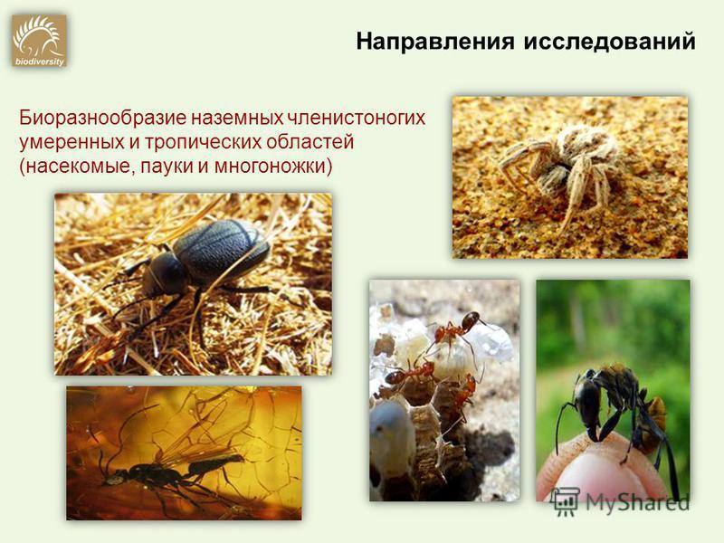 Биоразнообразие наземных членистоногих умеренных и тропических областей (насекомые, пауки и многоножки)