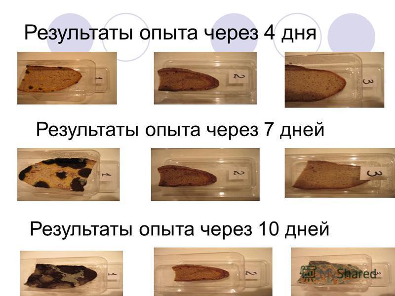 Результаты опыта через 4 дня Результаты опыта через 7 дней Результаты опыта через 10 дней