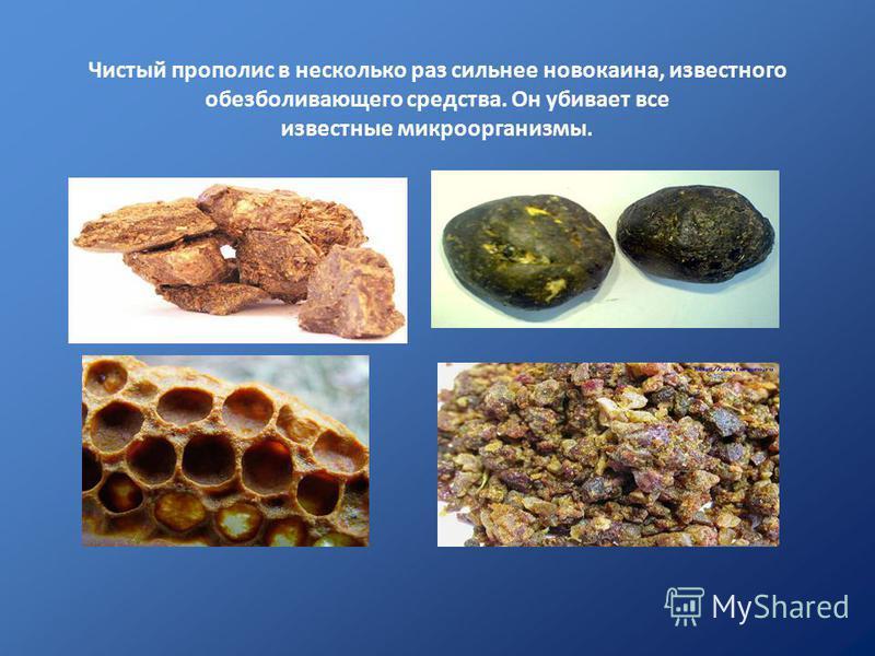 Чистый прополис в несколько раз сильнее новокаина, известного обезболивающего средства. Он убивает все известные микроорганизмы.