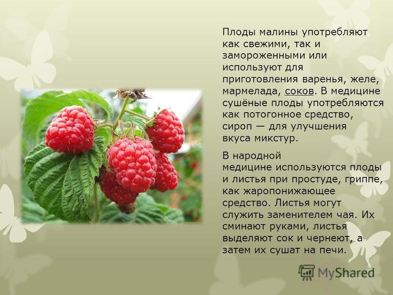 Плоды малины употребляют как свежими, так и замороженными или используют для приготовления варенья, желе, мармелада, соков. В медицине сушёные плоды употребляются как потогонное средство, сироп для улучшения вкуса микстур. В народной медицине использ