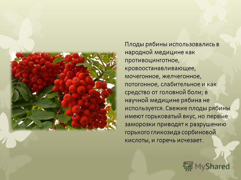 Плоды рябины использовались в народной медицине как противоцинготное, кровоостанавливающее, мочегонное, желчегонное, потогонное, слабительное и как средство от головной боли; в научной медицине рябина не используется. Свежие плоды рябины имеют горько
