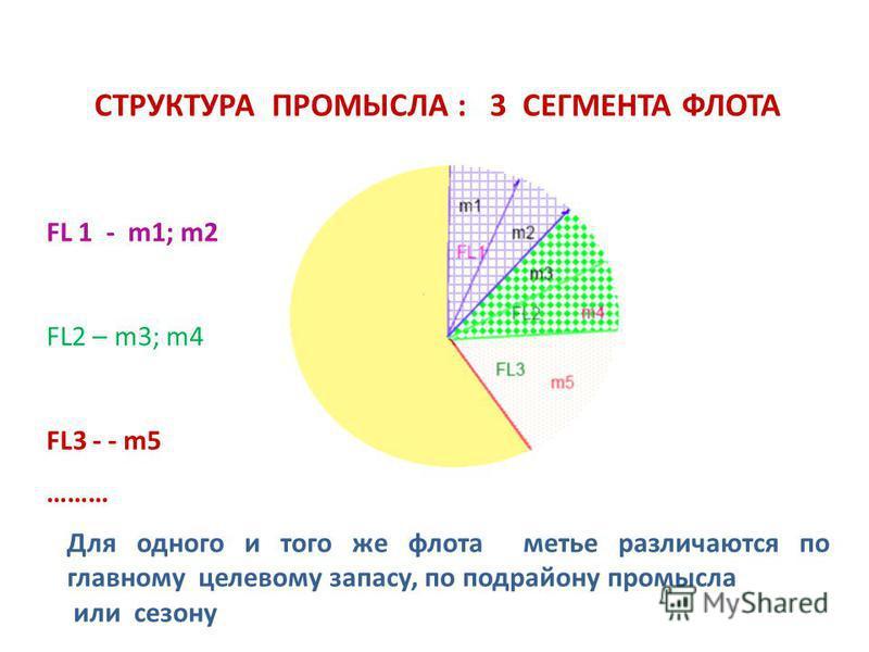 СТРУКТУРА ПРОМЫСЛА : 3 СЕГМЕНТА ФЛОТА FL 1 - m1; m2 FL2 – m3; m4 FL3 - - m5 ……… Для одного и того же флота матье различаются по главному целевому запасу, по подрайону промысла или сезону