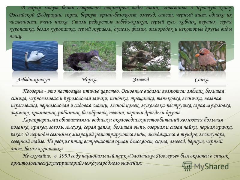 В парке могут быть встречены некоторые виды птиц, занесенные в Красную книгу Российской Федерации: скопа, беркут, орлан-белохвост, змееяд, сапсан, черный аист, однако их численность очень низка. Стали редкостью лебедь-кликун, серый гусь, кобчик, пере
