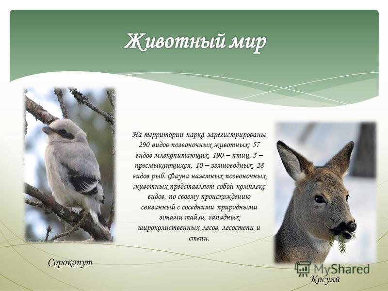 На территории парка зарегистрированы 290 видов позвоночных животных: 57 видов млекопитающих, 190 – птиц, 5 – пресмыкающихся, 10 – земноводных, 28 видов рыб. Фауна наземных позвоночных животных представляет собой комплекс видов, по своему происхождени