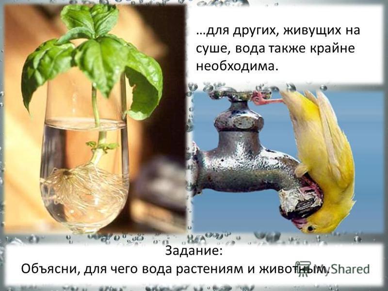…для других, живущих на суше, вода также крайне необходима. Задание: Объясни, для чего вода растениям и животным.