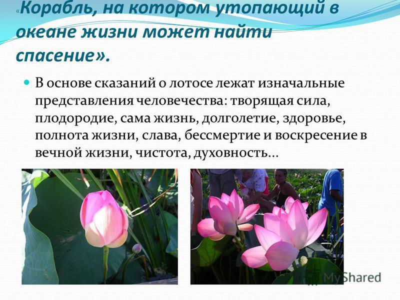 В краю цветущего лотоса. Чудесный цветок лотоса произрастает из грязи, но остаётся всегда чистым. Лотос послан небом, чтоб напомнить человеку о том, что жизнь свою человек должен прожить в чистоте и в пользе для общества. Лотос - символ чистоты и нра