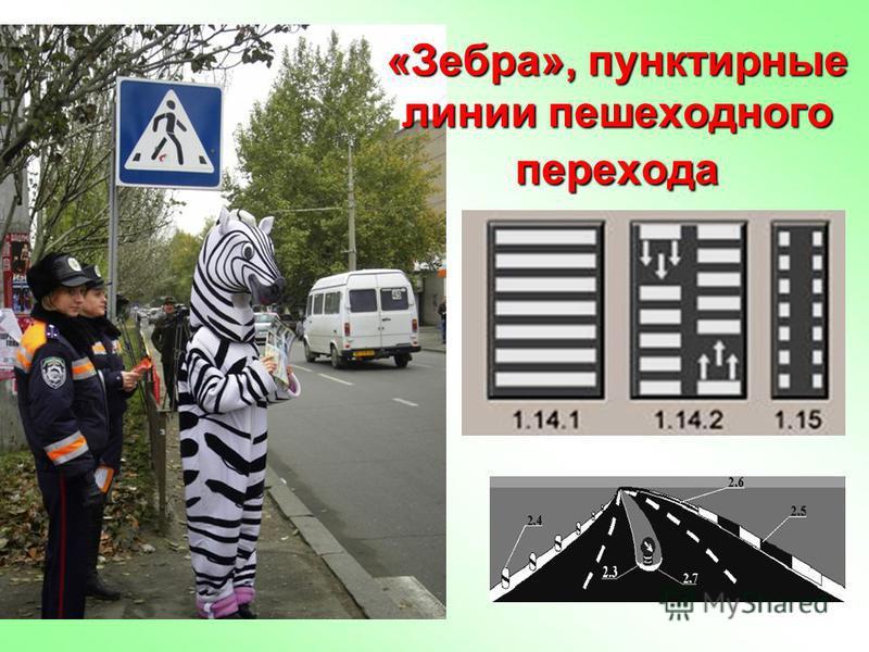 «Зебра», пунктирные линии пешеходного перехода