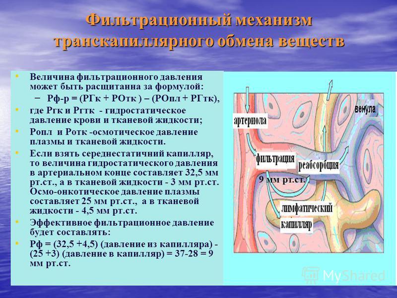 Фильтрационный механизм транскапиллярного обмена веществ Величина фильтрационного давления может быть расщитанна за формулой: – – Рф-р = (РГк + РОтк ) – (РОпл + РГтк), где Ргк и Ргтк - гидростатическое давление крови и тканевой жидкости; Ропл и Ротк