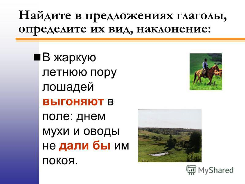 Найдите в предложениях глаголы, определите их вид, наклонение: В жаркую летнюю пору лошадей выгоняют в поле: днем мухи и оводы не дали бы им покоя.