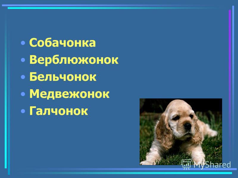 Собачнока Верблюжнок Бельчнок Медвежнок Галчнок