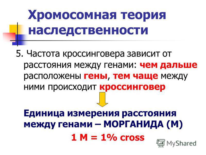 Хромосомная теория наследственности 5. Частота кроссинговера зависит от расстояния между генами: чем дальше расположены гены, тем чаще между ними происходит кроссинговер Единица измерения расстояния между генами – МОРГАНИДА (М) 1 М = 1% cross