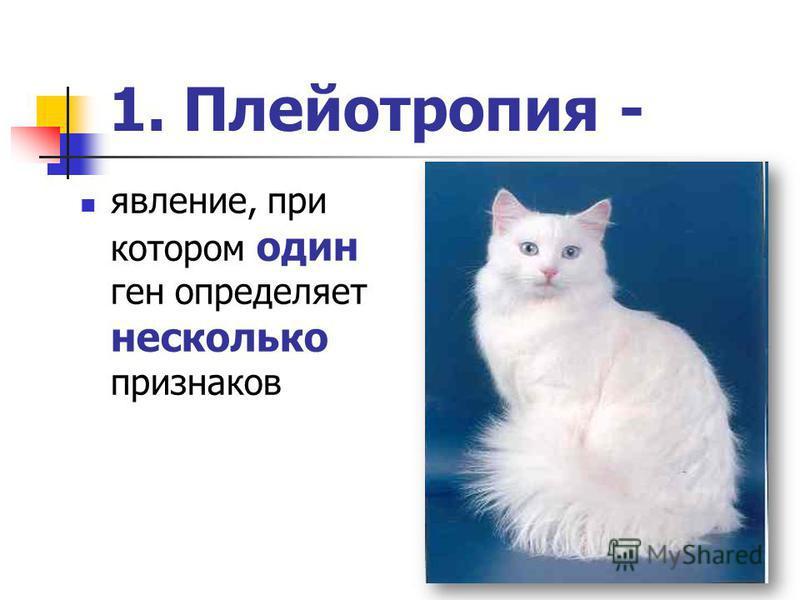 1. Плейотропия - явление, при котором один ген определяет несколько признаков