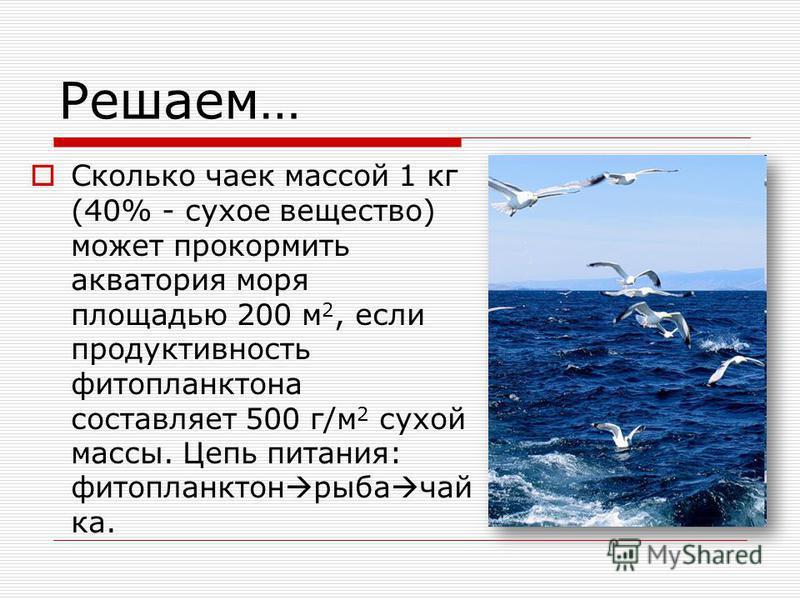 Решаем… Сколько чаек массой 1 кг (40% - сухое вещество) может прокормить акватория моря площадью 200 м 2, если продуктивность фитопланктона составляет 500 г/м 2 сухой массы. Цепь питания: фитопланктон рыба чай ка.
