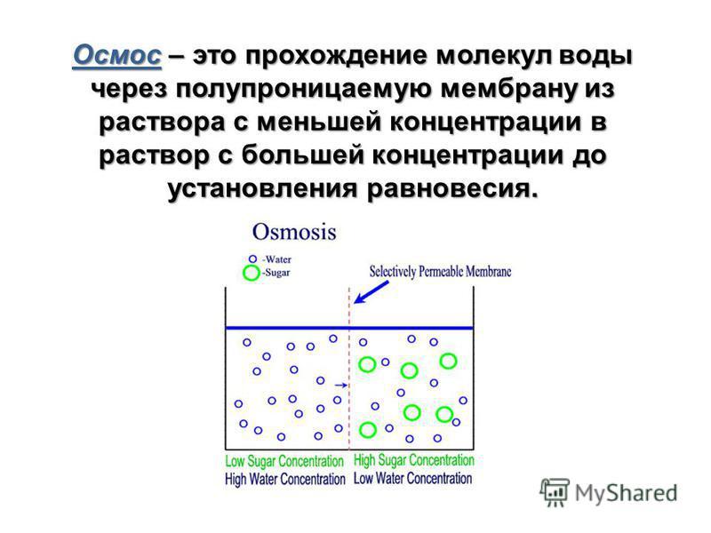 Осмос – это прохождение молекул воды через полупроницаемую мембрану из раствора с меньшей концентрации в раствор с большей концентрации до установления равновесия.
