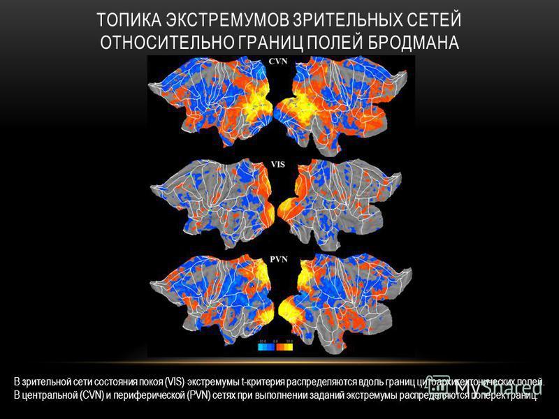 ТОПИКА ЭКСТРЕМУМОВ ЗРИТЕЛЬНЫХ СЕТЕЙ ОТНОСИТЕЛЬНО ГРАНИЦ ПОЛЕЙ БРОДМАНА В зрительной сети состояния покоя (VIS) экстремумы t-критерия распределяются вдоль границ цитоархитектонических полей. В центральной (CVN) и периферической (PVN) сетях при выполне