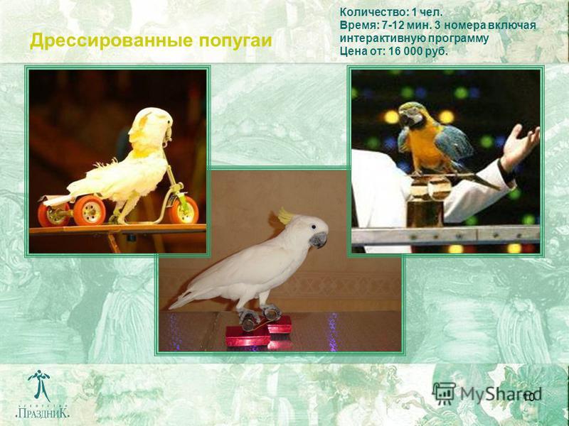 10 Дрессированные попугаи Количество: 1 чел. Время: 7-12 мин. 3 номера включая интерактивную программу Цена от: 16 000 руб.
