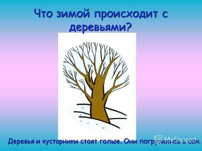 Что зимой происходит с деревьями? Деревья и кустарники стоят голые. Они погрузились в сон.