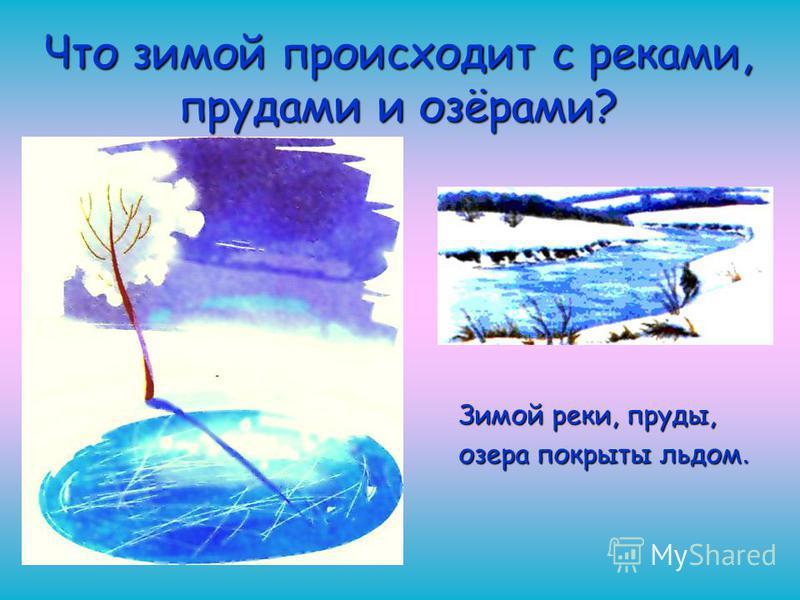 Что зимой происходит с реками, прудами и озёрами? Зимой реки, пруды, озера покрыты льдом.