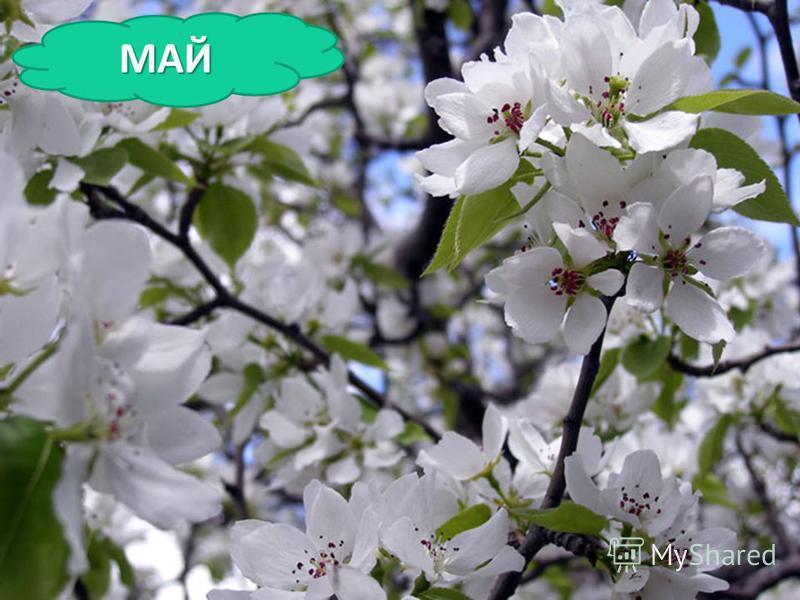 Зеленеет даль полей, Запевает соловей. В белый цвет оделся сад, Пчелы первые летят. Гром грохочет. Угадай, Что за месяц это? … Зеленеет даль полей, Запевает соловей. В белый цвет оделся сад, Пчелы первые летят. Гром грохочет. Угадай, Что за месяц это