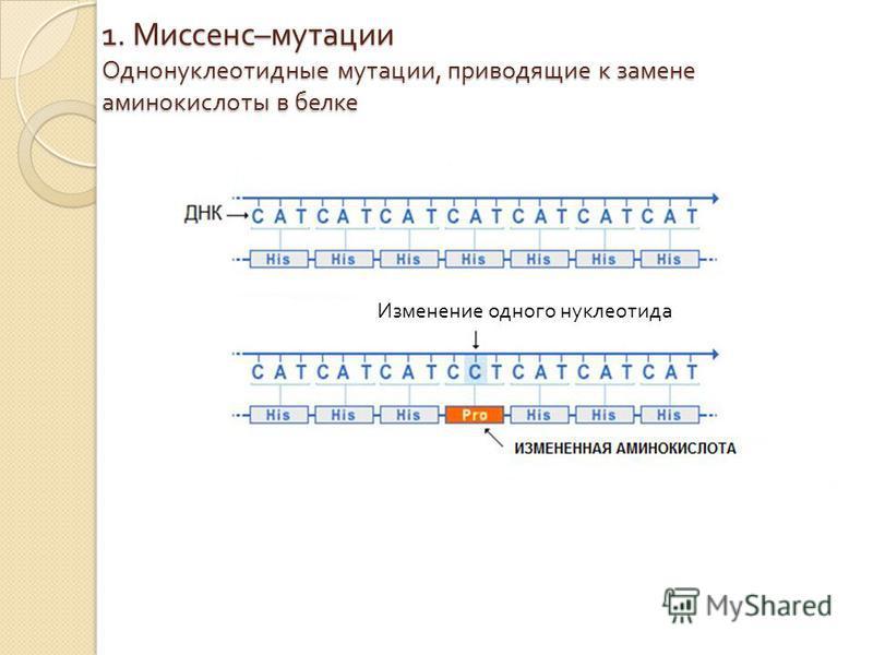 1. Миссенс – мутации Однонуклеотидные мутации, приводящие к замене аминокислоты в белке Изменение одного нуклеотида