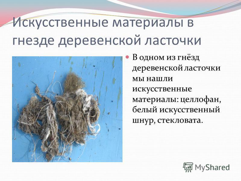 Искусственные материалы в гнезде деревенской ласточки В одном из гнёзд деревенской ласточки мы нашли искусственные материалы: целлофан, белый искусственный шнур, стекловата.
