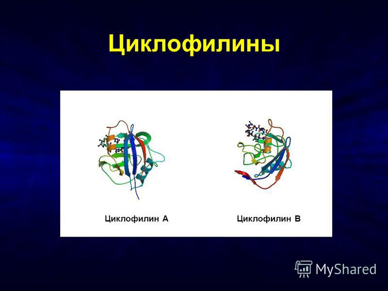 Циклофилины Циклофилин AЦиклофилин B