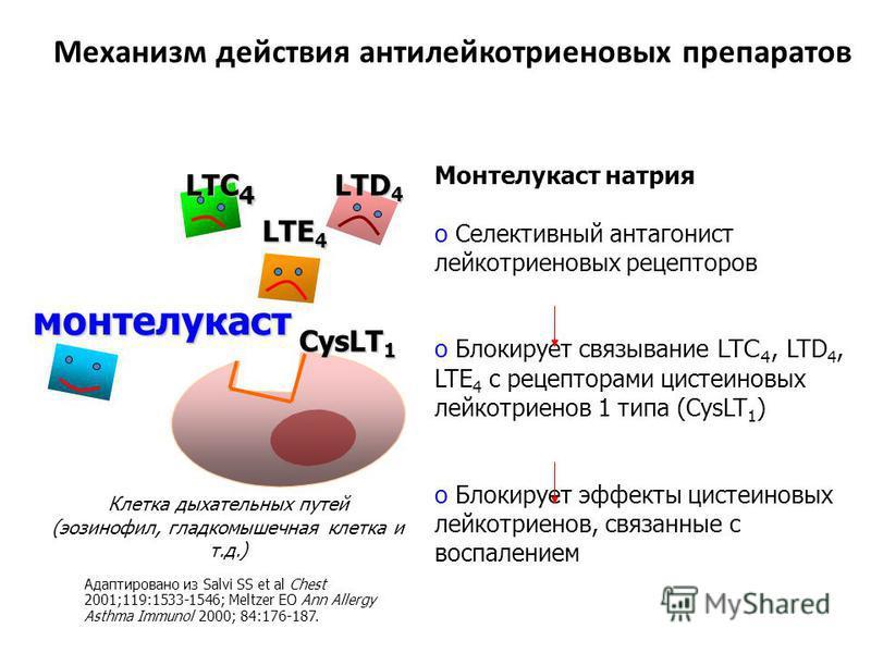 Механизм действия антилейкотриеновых препаратов Клетка дыхательных путей (эозинофил, гладкомышечная клетка и т.д.) Монтелукаст натрия o Селективный антагонист лейкотриеновых рецепторов o Блокирует связывание LTC 4, LTD 4, LTE 4 с рецепторами цистеино