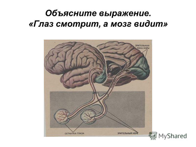 Объясните выражение. «Глаз смотрит, а мозг видит»