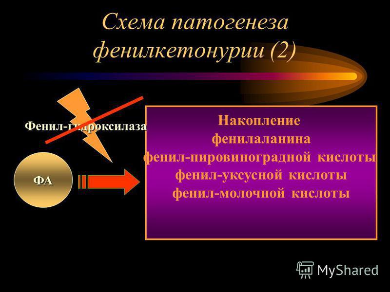 Схема патогенеза фенилкетонурии (2) ФА Накопление фенилаланина фенил-пировиноградной кислоты фенил-уксусной кислоты фенил-молочной кислоты Фенил-гидроксилаза