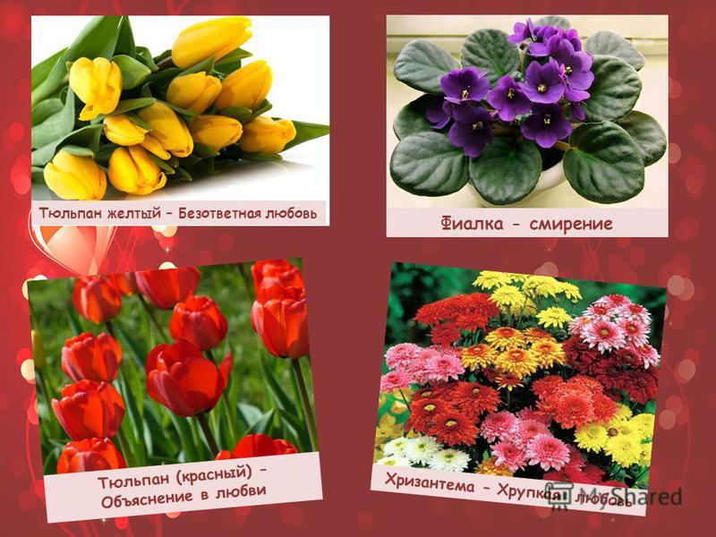 Тюльпан желтый – Безответная любовь Тюльпан (красный) – Объяснение в любви Фиалка - смирение Хризантема – Хрупкая любовь