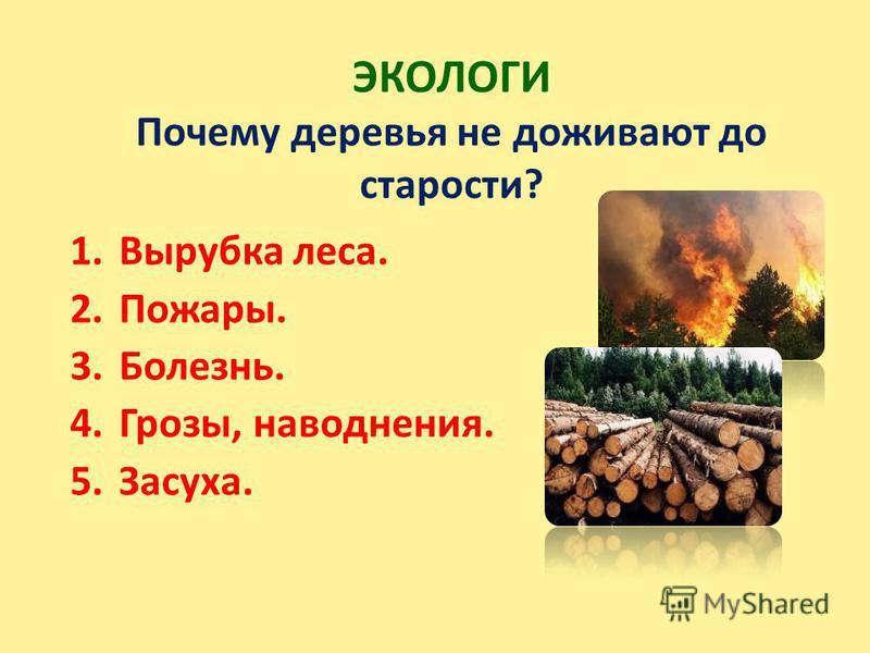 ЭКОЛОГИ Почему деревья не доживают до старости? 1. Вырубка леса. 2.Пожары. 3.Болезнь. 4.Грозы, наводнения. 5.Засуха.