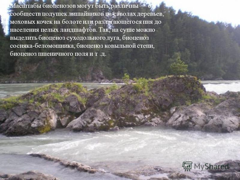 Масштабы биоценозов могут быть различны от сообществ подушек лишайников на стволах деревьев, моховых кочек на болоте или разлагающегося пня до населения целых ландшафтов. Так, на суше можно выделить биоценоз суходольного луга, биоценоз сосняка-беломо