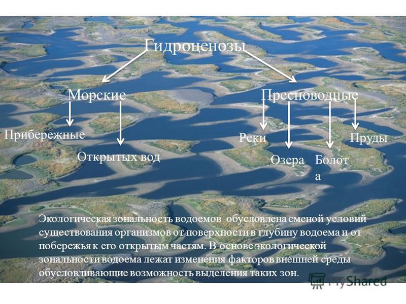 Гидроценозы Морские Пресноводные Прибережные Открытых вод Реки Озера Болот а Пруды Экологическая зональность водоемов обусловлена сменой условий существования организмов от поверхности в глубину водоема и от побережья к его открытым частям. В основе