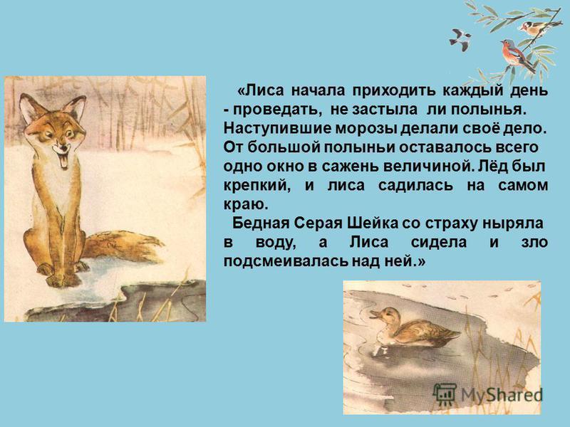 «Лиса начала приходить каждый день - проведать, не застыла ли полынья. Наступившие морозы делали своё дело. От большой полыньи оставалось всего одно окно в сажень величиной. Лёд был крепкий, и лиса садилась на самом краю. Бедная Серая Шейка со страху