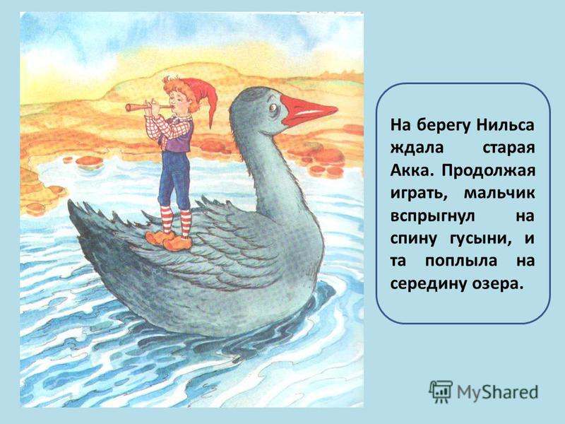 На берегу Нильса ждала старая Акка. Продолжая играть, мальчик вспрыгнул на спину гусыни, и та поплыла на середину озера.