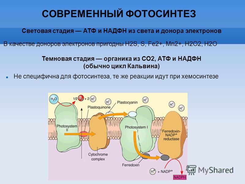 СОВРЕМЕННЫЙ ФОТОСИНТЕЗ В качестве доноров электронов пригодны H2S, S, Fe2+, Mn2+, H2O2, H2O Световая стадия АТФ и НАДФН из света и донора электронов Темновая стадия органика из СО2, АТФ и НАДФН (обычно цикл Кальвина) Не специфична для фотосинтеза, те