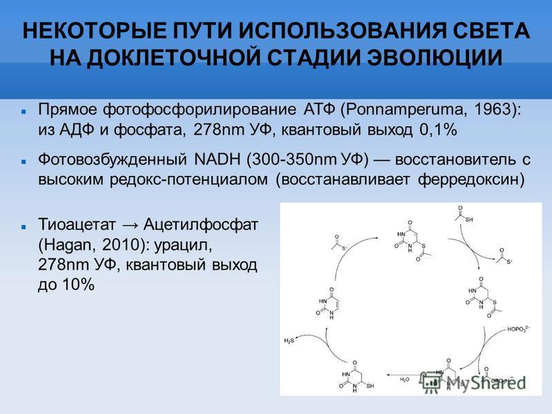 НЕКОТОРЫЕ ПУТИ ИСПОЛЬЗОВАНИЯ СВЕТА НА ДОКЛЕТОЧНОЙ СТАДИИ ЭВОЛЮЦИИ Прямое фотофосфорилирование АТФ (Ponnamperuma, 1963): из АДФ и фосфата, 278nm УФ, квантовый выход 0,1% Фотовозбужденный NADH (300-350nm УФ) восстановитель с высоким редокс-потенциалом