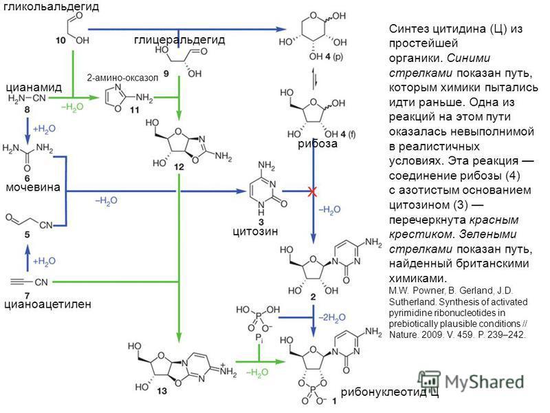 Синтез цитидина (Ц) из простейшей органики. Синими стрелками показан путь, которым химики пытались идти раньше. Одна из реакций на этом пути оказалась невыполнимой в реалистичных условиях. Эта реакция соединение рибозы (4) с азотистым основанием цито
