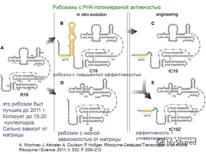 Рибозимы с РНК-полимеразной активностью A. Wochner, J. Attwater, A. Coulson, P. Holliger. Ribozyme-Catalyzed Transcription of an Active Ribozyme //Science. 2011. V. 332. P. 209–212 это рибозим был лучшим до 2011 г. Копирует до 15-20 нуклеотидов. Силь