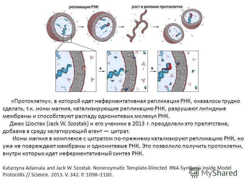 «Протоклетку», в которой идет неферментативная репликация РНК, оказалось трудно сделать, т.к. ионы магния, катализирующие репликацию РНК, разрушают липидные мембраны и способствуют распаду однонитевых молекул РНК. Джек Шостак (Jack W. Szostak) и его