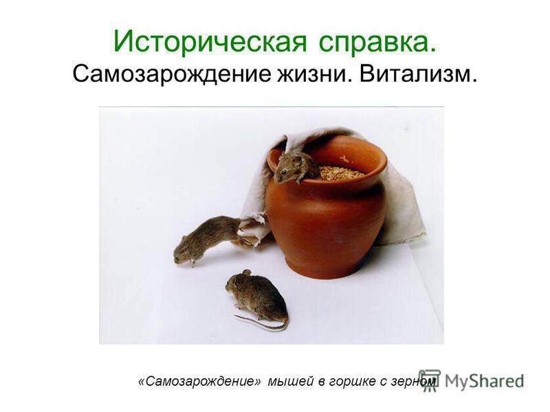 Историческая справка. Самозарождение жизни. Витализм. «Самозарождение» мышей в горшке с зерном